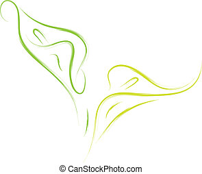 calla lilies flowers - vector illustration of calla lily...