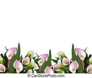 Image composition of pink calla lilies for wedding, birthday, party invitation, border or frame with copy space.