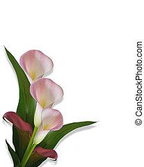 Calla Lilies pink border - Image composition of pink calla...