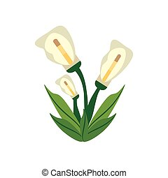 calla lily flower image