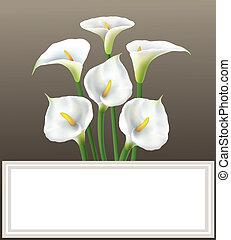 Calla lily - greeting card
