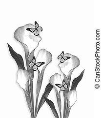 Calla lily pencil sketch drawing - Calla lily and...