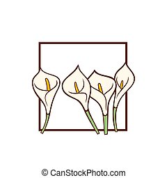 Calla lily white flowers. Vector card template.