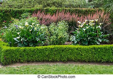 calla, planté, lis, jardin, fleurir