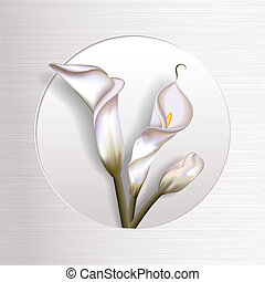 Callas In Frame - Elegant blooming calla flowers in simple...