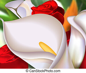 Callas & Roses Callas & Roses - Beautiful garden flowers. ...