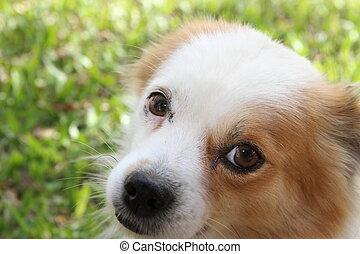 calle, perro, abandonado, víctima, de, abuso de animal