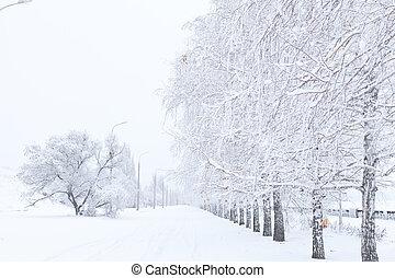 callejón, árboles invierno, cubierto