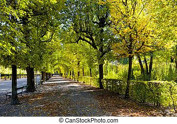 callejón, en, el, otoño, parque