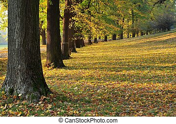 callejón, en el parque
