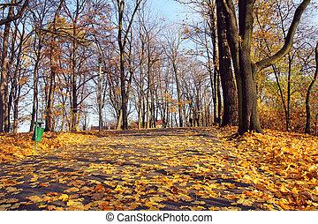 callejón, en, otoño, parque, en, día soleado
