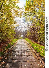 callejón, en, otoño, parque