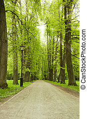callejón, en, parque verde