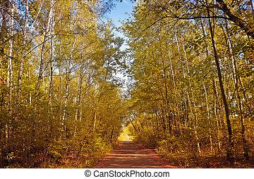 callejón, en, un, bosque de otoño
