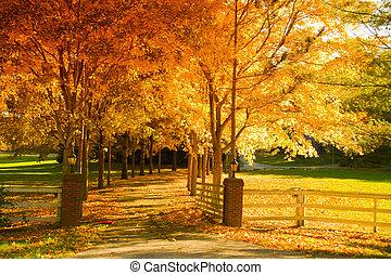 callejón, otoño