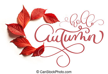calligraphy lettering text hello Autumn. red leaves on a white background