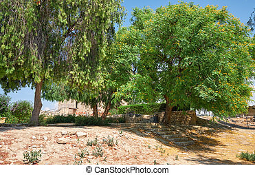 Callistemon and rosewood trees in the garden of Kolossi ...