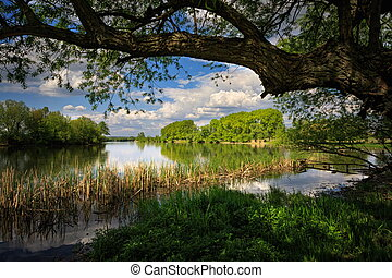 Calm and idyllic river in the nature reserve spring, summer. On the dense river bank