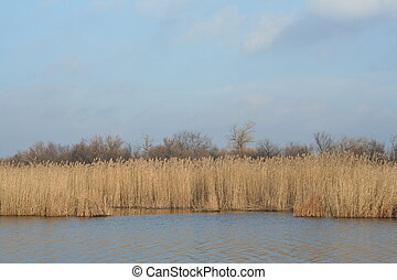 Calm autumn river with dry reeds in the evening sun