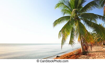 Calm Daylight Scene from the Beach - Beach in the caribbean...