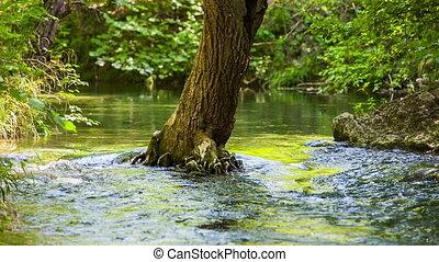 Calm flow of a mountain river