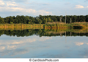 calm forest lake during sunset