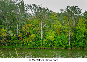 Calm forest lake on a quiet Sunny day. Summer landscape