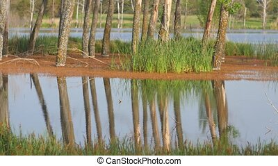 Calm Lake with Trees
