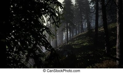 Calm moody forest in misty fog in the morning