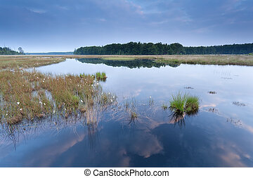 calm morning on wild lake, Drenthe, Netherlands