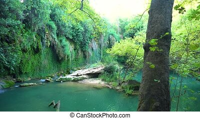 Calm pond in jungle - Breathtaking view of beautiful pond...
