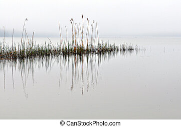 Calm sea - A calm sea with some reed in the morning.