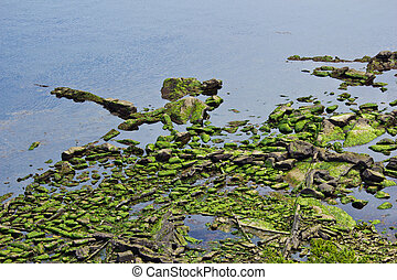 Calm Seascape with algae covered rocks in foreground