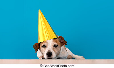 Calm small Jack Russell Terrier dog in funny unicorn headgear