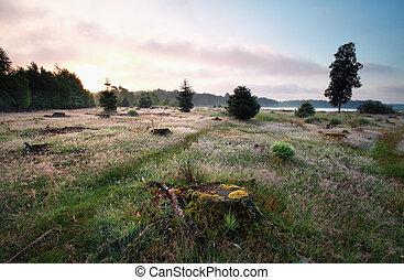 calm summer sunrise on meadow