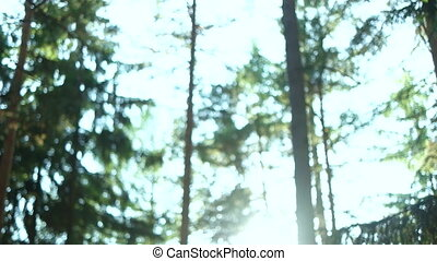 Calm Tranquil Forest Scene - Tilting movement stopping at...