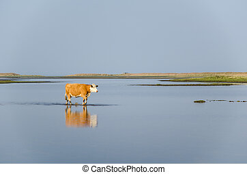 Calm water with walking cow