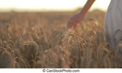 Calm woman walking throung wheat field at sunset