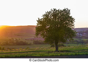 calme, et, paisible, vue, de, beau, grand, arbre vert, à, coucher soleil, croissant, seul, dans, printemps, champ, sur, lointain, petit, village, entre, vert, jardins, et, collines, arrière-plan., beauté, et, harmonie, de, nature, concept.