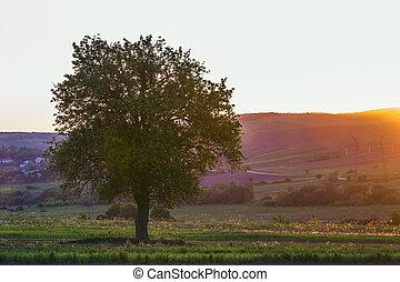 calme, et, paisible, vue, de, beau, grand, arbre vert, à, coucher soleil, croissant, seul, dans, printemps, champ, sur, lointain, collines, baigné, dans, orange, soir, lumière soleil, et, haute tension, lignes, étirage, à, horizon, arrière-plan.