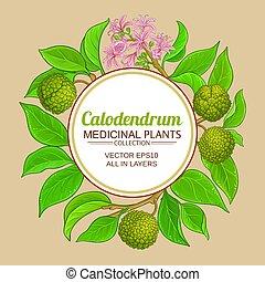 calodendrum, ułożyć, wektor