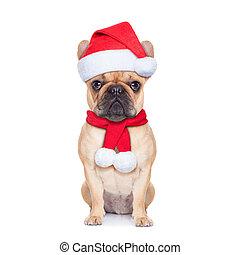 calus, pies, święty