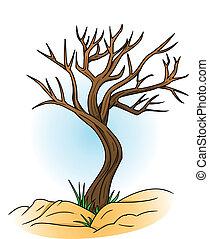 calvo, albero