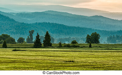 camadas, montanha, árvores verdes