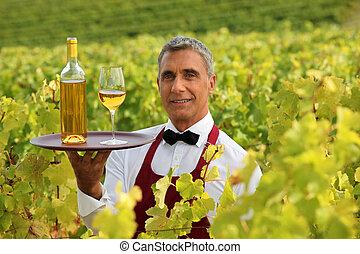 camarero de vino, en el medio, de, viñas