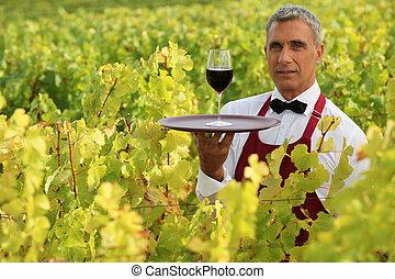 camarero, en, campo, con, vaso de vino