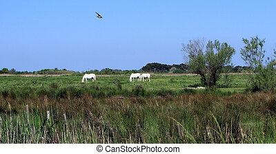 Camargue landscape, France