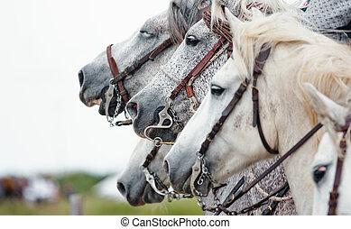 camargue, paarden, closeup