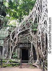 Cambodia - Angkor - Ta Prohm temple