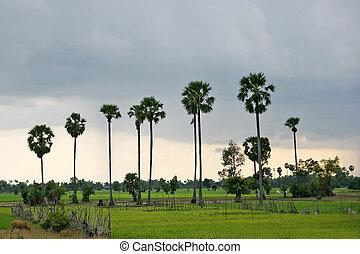 Cambodia landscape - Cambodian rice fields near Angkor Wat